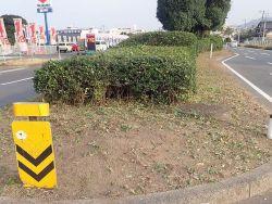 樹木剪定02
